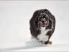 SNOW-DOG-a19643558